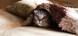 Probiotiques pour les chats